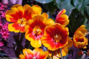 flowershow2014-25
